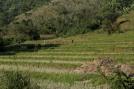 Highway 4044 Rice Field